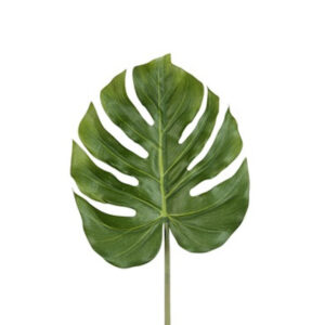 Philodendron blad groen